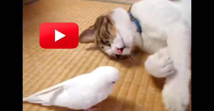 A Little Bird Wakes Up Her Cat BFF And His Reaction Is Unexpected! | The Animal Rescue Site Blog