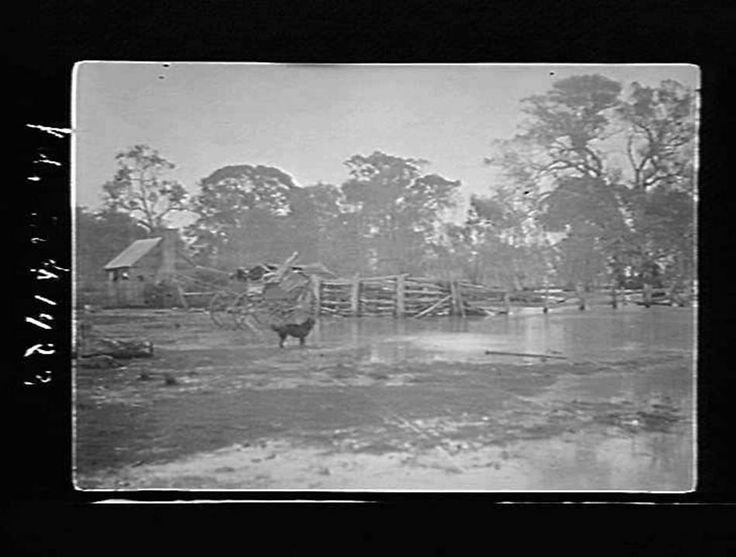 The Mt William Creek in flood at Dinah's farm near Stawell , in 1923.