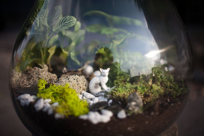 Terrarium guide. I can't wait to use my little plastic animals and create little worlds for them to live in! So cute!