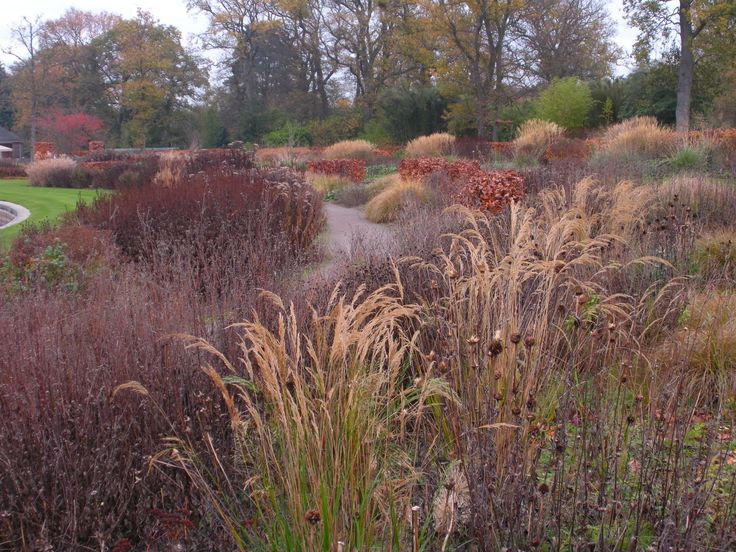42 best images about wild grasses on pinterest sun for Wild grass gardens