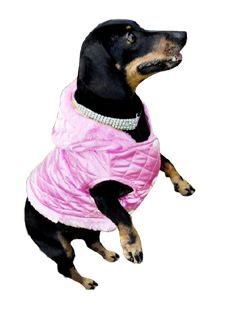Rose - Our Fashionista. Read her story here: http://doggiehillfigher.com/pages/our-muse