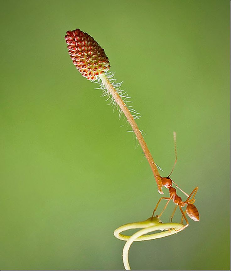 Ant power: Macros Ants, To Reflect, Art Photography, La Fortaleza, Fortaleza Frases, Extraordinari Animal, Sentences To, Fortaleza Crece, Ants Si