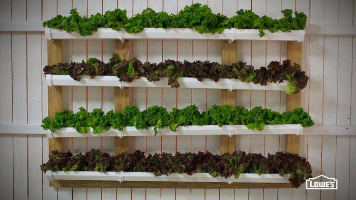 verschiedene Salatsorten  vertikal  an der Wand  angebaut  frisches Gemüse  zur Hand haben