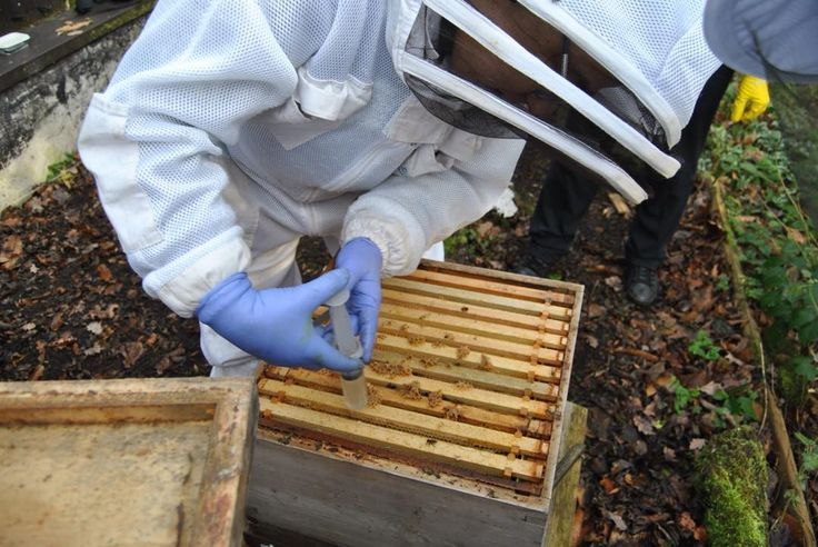 Big thanks to Phil and the team #Sheffieldbeekeepers for the oxalic acid treatment demo @EcclesallWoods #discoverycentre yesterday #beekeeper