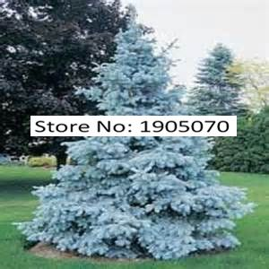 Tree seeds New Arrival Home Garden Plant 100 Seeds Evergreen Colorado Blue Spruce Picea Pungens Glauca Tree Seeds Free Shipping #>=#>=#>=#>=#> Click on the pin to check out discount price, color, size, shipping, etc. Save and like it!