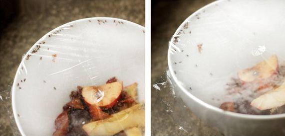 Obstfliegenfalle aus einer Schale und Klarsichtfolie
