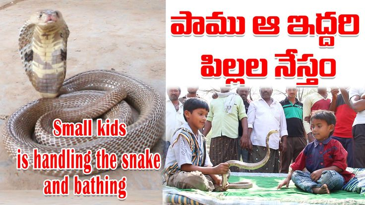 Snake Bathing With two kids and handling the snake HD