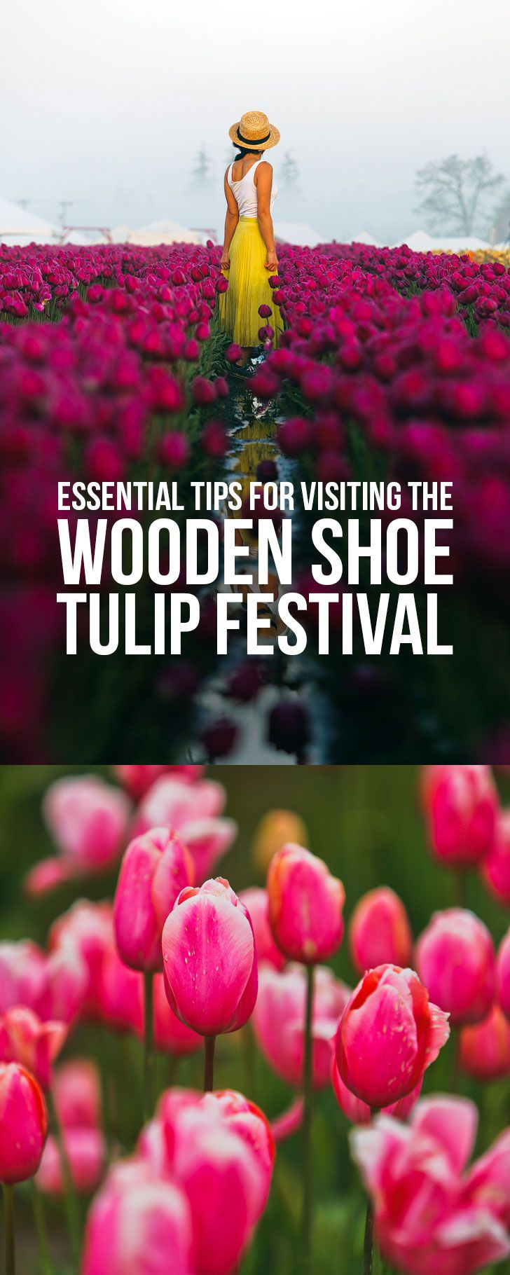 Essential Tips for Visiting the Tulip Festival Woodburn Oregon - 30-40 minutes south of Portland Oregon #woodburn #oregon #woodenshoe #pnw #tulipfestival #tulips #pacificnorthwest // Local Adventurer