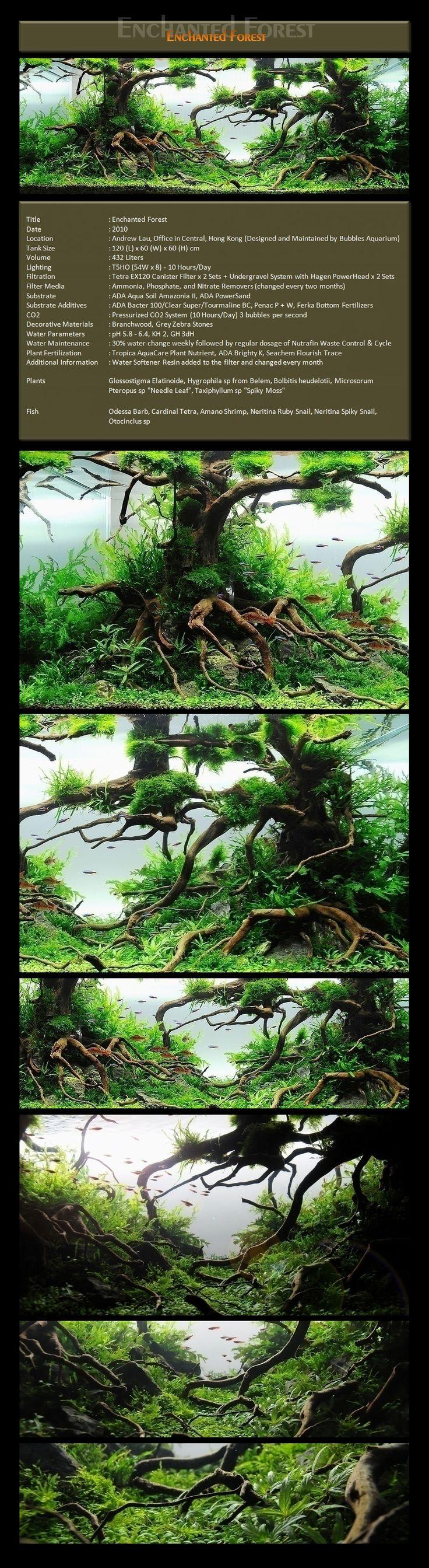 Bubbles Aquarium - Aquascapes (2009 Aquascaping Gallery) Enchanted Forest http://bubblesaquarium.com/Aquascape/Gallery2010/Gallery2010_2_Enchanted.htm