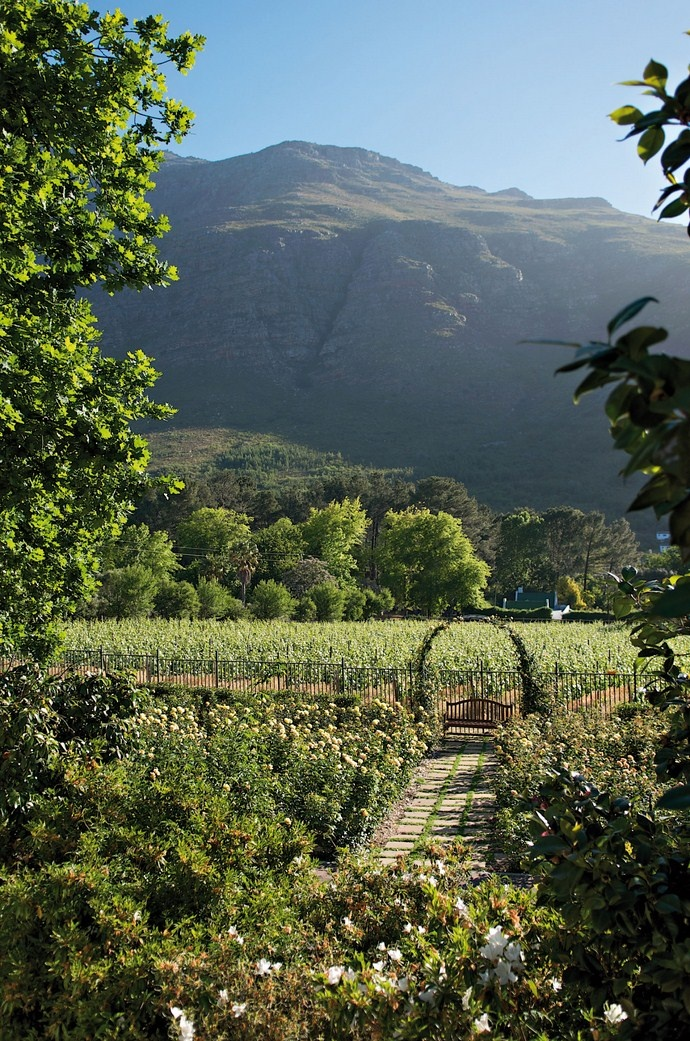 The extensive rose gardens overlook the orchards and the majestic Jonkershoek mountains.