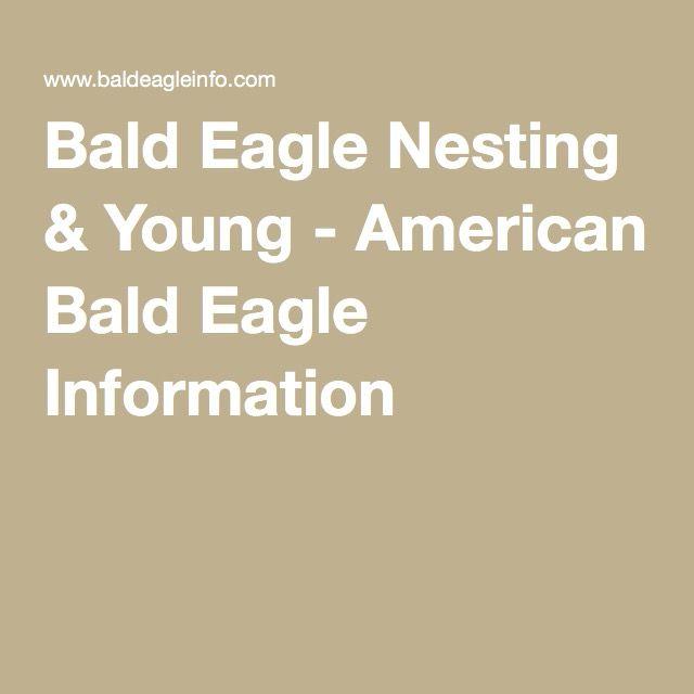 Bald Eagle Nesting & Young - American Bald Eagle Information
