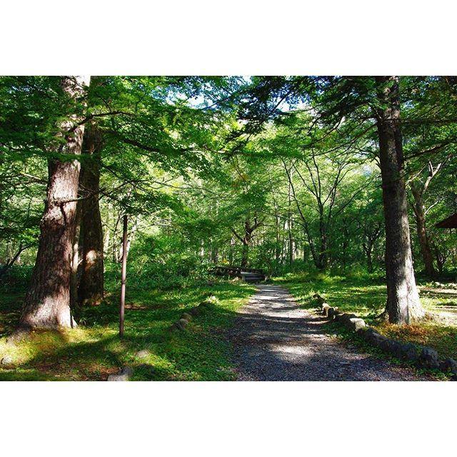 キャプション→移動中は緑に包まれて癒されます #上高地 #散策 ・ 2009.9月撮影 ・ ・ #風景 #景色 #自然 #木 #林 #森林 #森林系 #trees #woods #daytimeview #nature #naturelovers #landscape #scenery #photo #photography #instaphoto #japan #instagramjapan #instagood ユーザー→f8ss125 場所→Kamikōchi