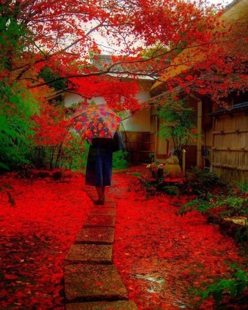 I must go..See you later..Beautiful Autumn..... http://ift.tt/2i388z4
