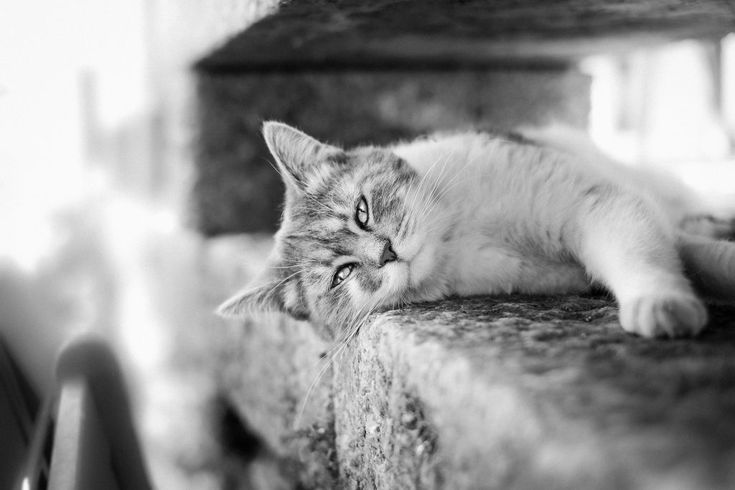 Download this free photo here www.picmelon.com #freestockphoto #freephoto #freebie /// Relaxing Cat in Black and White | picmelon