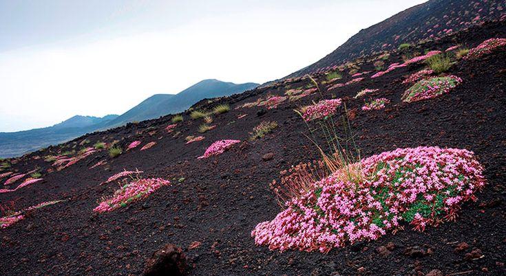 Les plantes couvre-sol sont parfaites pour former une végétation dense et ornementale sans beaucoup d'entretien. Regardez plutôt !