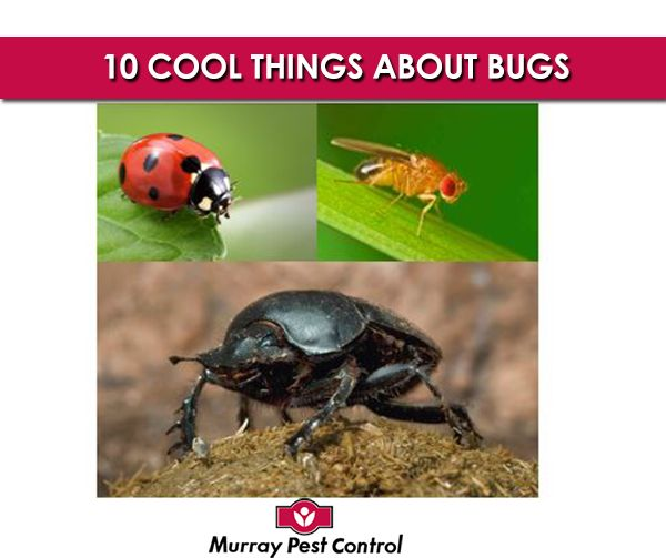We love creepy crawlies, whereas others people find them, well, a bit gross! Here's 10 crazy facts about some of the world's most amazing insects 1) A ladybird might eat more than 5,000 insects in its lifetime! 2) Fruit flies were the first living creatures to be sent into space. 3) Dragonflies have been on earth for 300 million years! 4) One dung beetle can drag 1,141 times its weight - that's like a human pulling six double-decker buses! 5) A single honeybee colony can produce around 100kg…