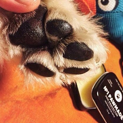 "Now that's a healthy looking paw. #Pawmade Thanks for sharing @meowmeowmee. • ""Wow it only took a less than a week to get this precious jelly\pad balm!! I love the packaging and the lovely aroma of the product! It absorbs really quickly and doesn't get too oily or slippery. Ora, 9 yrs old doggy from south Korea  says thank u!"" - @meowmeowmee"