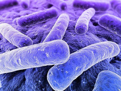 PURIFICACION DE AIRE AIRLIFE te dice El principal peligro de las bacterias Gram negativas es que estas infecciones no responden a los tratamientos antibióticos estándar. Por ejemplo, las bacterias Gram negativas resisten los efectos de la penicilina y la cefalosporina porque estos antibióticos funcionan interrumpiendo las paredes celulares, que no tienen las bacterias Gram negativas.