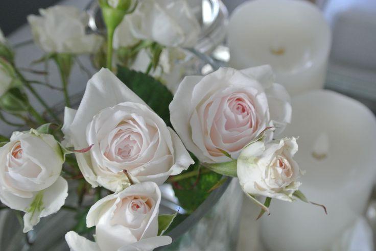 Vakre roser!<3
