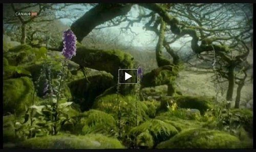 http://www.facebook.com/photo.php?v=412566783027    Source: The images in this video belong to the documentary series LIFE (Chapter 9 devoted to plants) of the BBC, narrated by David Attenborough. The video edition is unchanged from the original. Only music that sounds in this piece is a choice that I have, according to my tastes. The song is called 'Find our way home', the musician Message to Bears.  This video is dedicated to gardeners. And to all those who are sensitive and plant lovers…