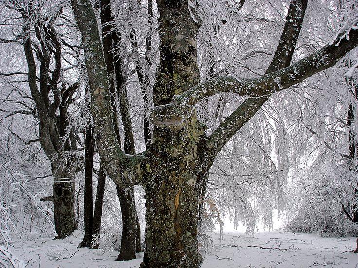 Ай-Петри зимой.Крым.