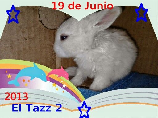 My pic pets,  Tazz 2   .