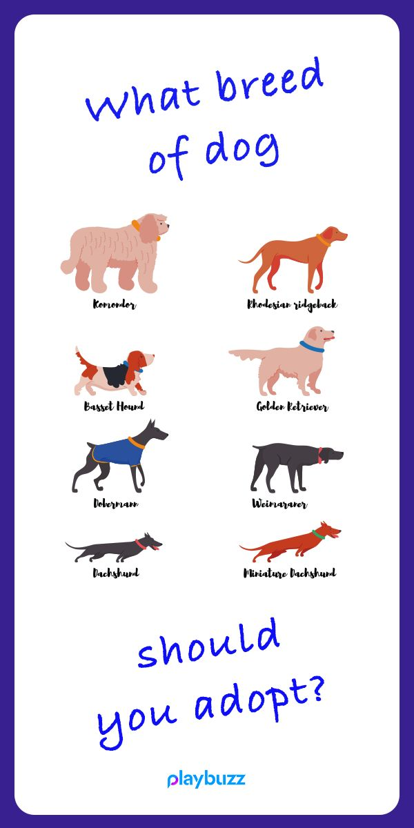 quiz to see what dog breed is best for you