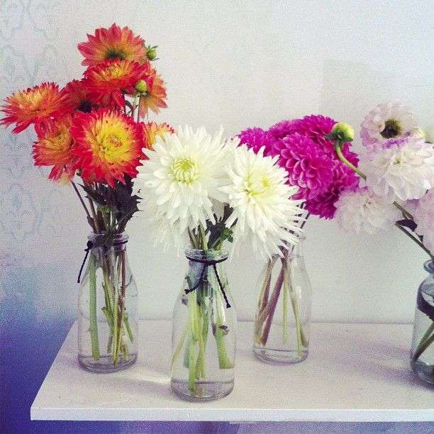 In case if the peonies are unavailable, I could have these dahlias instead.  Kwiaty&Miut