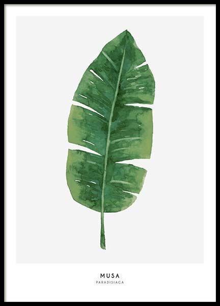 Musa Affiche dans le groupe Affiches / Botanique chez Desenio AB (2040)