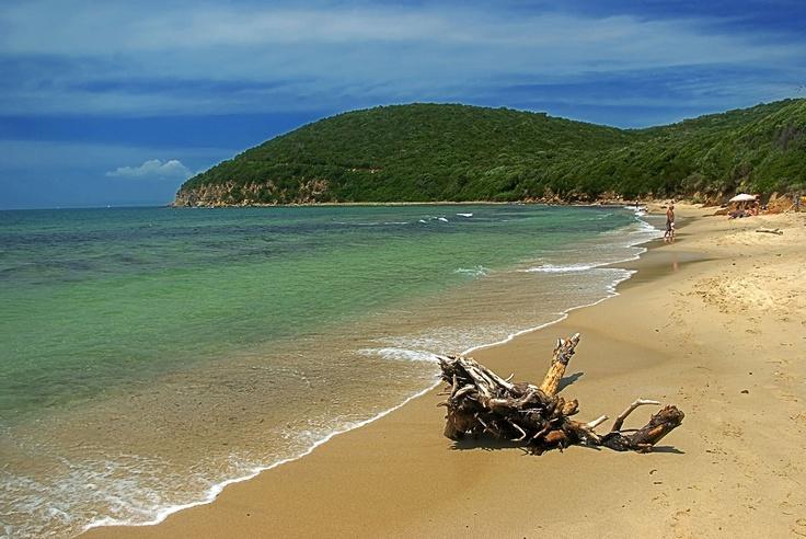 Cala Violina, una bella spiaggia nella Maremma Toscana|SpiaggiaMare