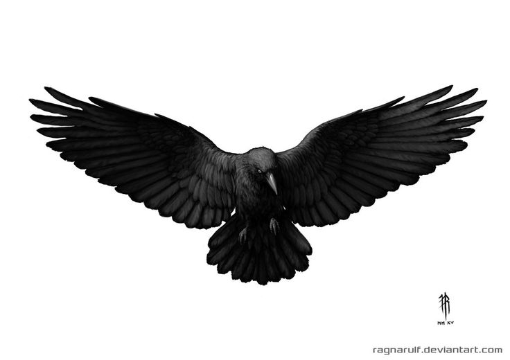 Design - Crows on Pinterest | Crow Tattoos, Crows and Ravens