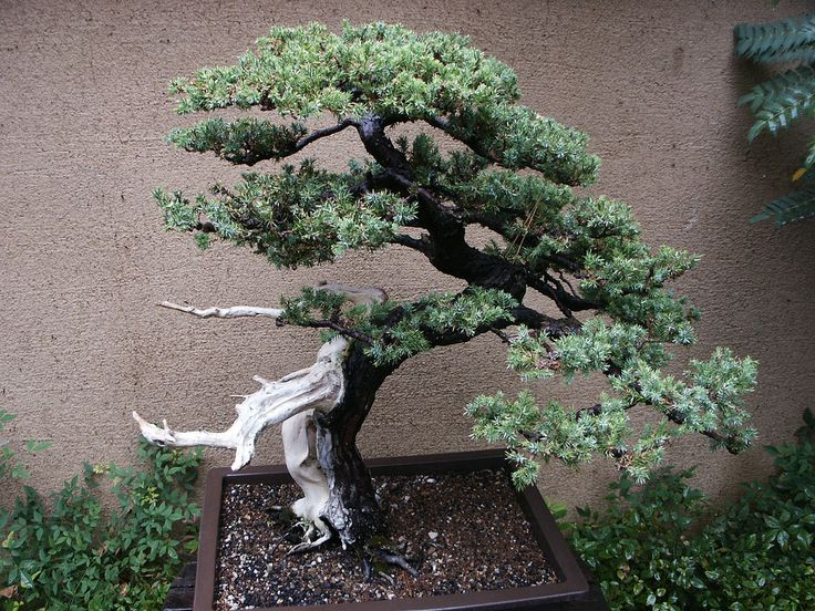 The Different Types Of Bonsai Trees