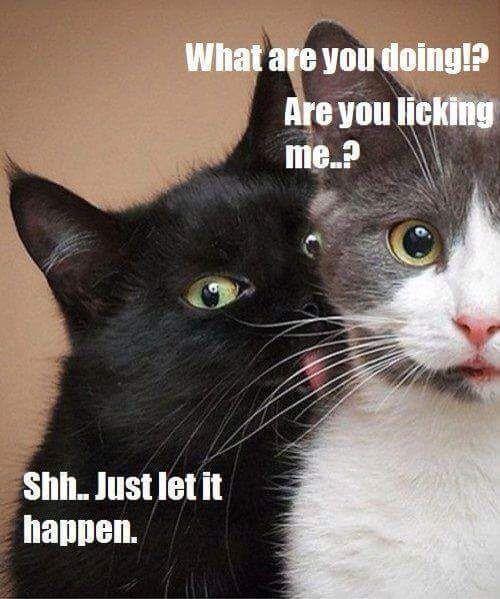 Cat meme collection