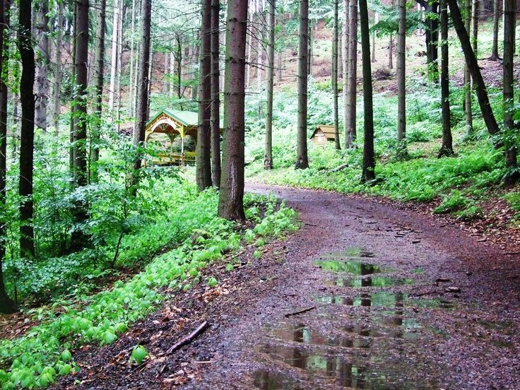 Karlovy Vary- trail after storm, carrying to Poets cabin