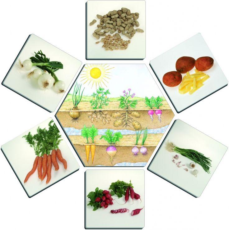 De unde provine hrana? Un joc de asociere pentru invatarea clasificarii produselor alimentare in functie de originea lor: radacinile plantelor (cartofi), din plante si arbustri (rosii), din pomi (mere) din mare (peste) si de la animale (oua, carne, etc.). Se pot juca pana la 5 copii. Jocul contine 5 carti hexagonale (reprezentand cinci origini ale [...]