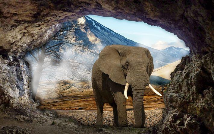 Download wallpapers elephant, cave, elephants, wildlife, photomanipulation