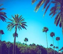 palms, morocco, photography, trees, tangier