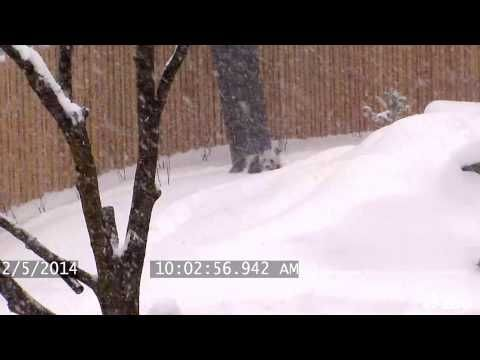Watch all of this incredible cuteness here! | A Panda Playing In The Snow Is Officially The Cutest Thing