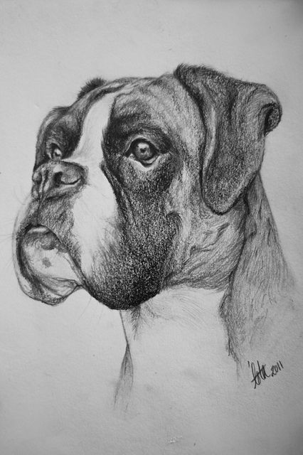 A5 Boxer drawing | Flickr - Photo Sharing!