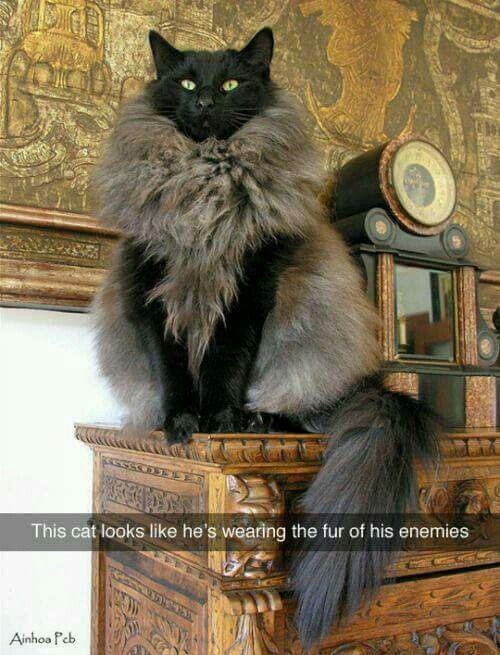 The fur of his enemies