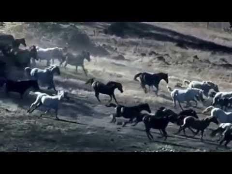 Красивые #лошади! Beautiful  #horse !