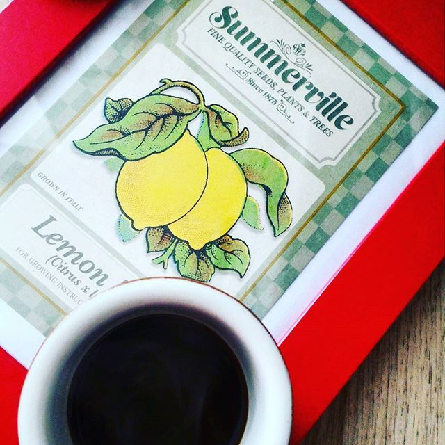 Come con arte va preparato, così con arte va bevuto.buon lunedì #caffecaffe #caffe #coffeart #moka_and_co #coffeelovers #coffee #caffeitaliano #moka #moka_lovers #infinity_coffeebreak #chiacchiereacolazione #caffenero #lemondrink #lemontree #lemon #summerville #summer2016 #summer #giornodestate #monday #coffeetime #coffeaddict #rdd_food #pocket_food #moka_and_co #moka_lovers #moka_loves_foods_#ikeastyle #ikeaitalia
