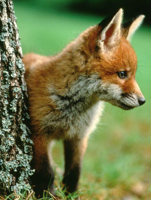 si il n'y a plus ces petites bêtes sauvages la chaine alimentaire sera detruite ! qu'on t-ils fait pour meriter cela?  #automne ♥