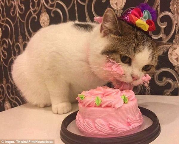 【あざとすぎ】誕生日ケーキをバクバク食う猫があまりにかわいいと話題に - ネタりか