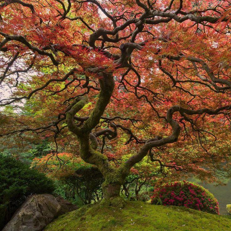 Japanese Maple Trees, Portland, Oregon #TourThePlanet