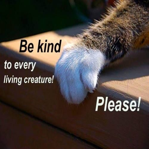 Be kind to EVERY living creature!
