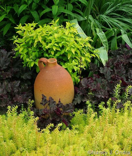 1000+ images about Sedums And Succulents on Pinterest