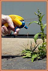 Wonders of vinegar: Garden Ideas, Stuff, Weed Killers, Vinegar, Gardening, Gardens, Tips, Things, Kill Weeds