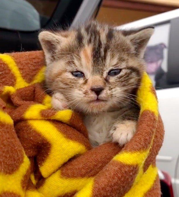 Pin By Yana Wierny On Rescue Kitten Rescue Catch The Cat Kitten