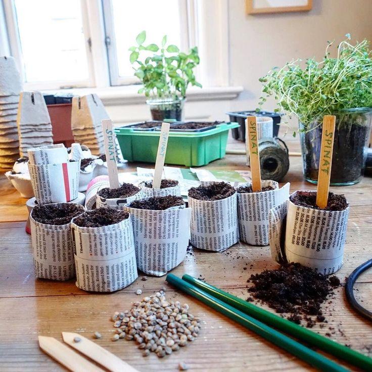 Tips! Lav du dine egne papirpotter #pottetræning #urbangardencompany #urbangarden #urbangardening #dyrkbyen #papirpotte #justaddwater #paperpot #sprouts #forspire  Vi har paper-pot makers i shoppen  >> link i profilen